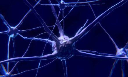 On a trouvé les neurones de l'instinct parental