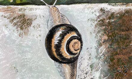 Les escargots sont de sortie